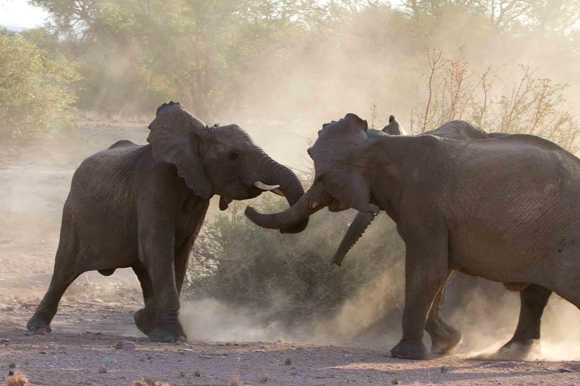 Eléphants - Namibie