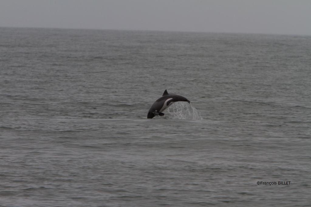Croisière - Walvis Bay