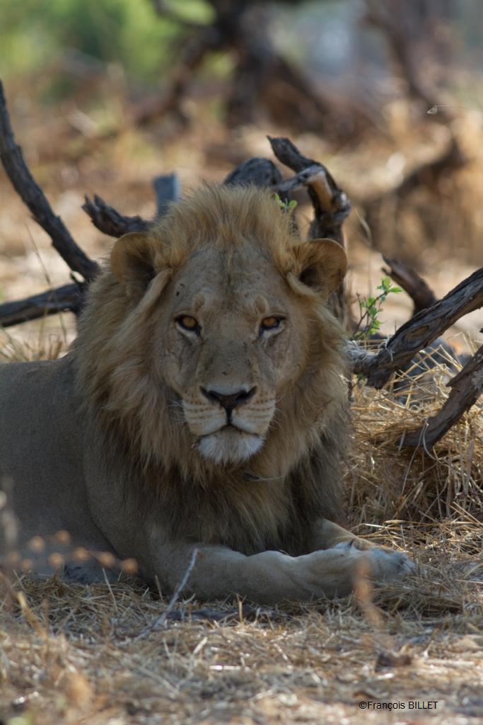 Etosha - Namibie