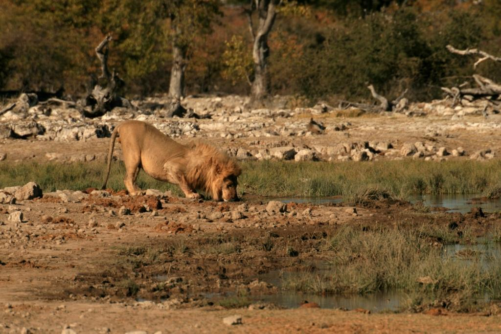 Parc d'Etosha - Namibie